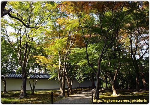 京都東山 東福寺 雑木林